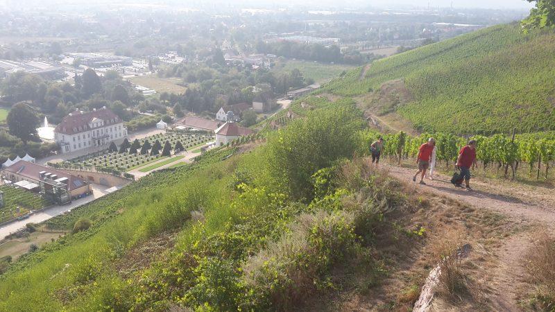 Aussicht auf Schloss und Weingut Wackerbarth
