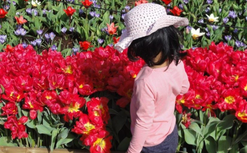 Holland zur Tulpenblüte – Flusskreuzfahrt