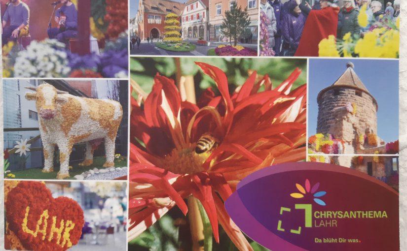 Chrysanthema: Auf zum Blumen- und Kulturfestival mit farbenfrohem Blumenschmuck.